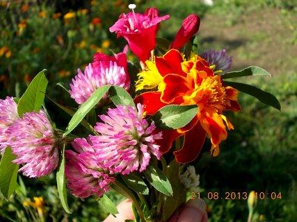 FOTKA - 21.8. - 13 - malou kytičku do malé vázy jsem si chystala