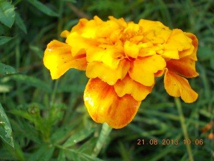 FOTKA - 21.8. - 22 - květ Afrikánu