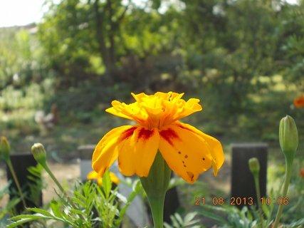 FOTKA - 21.8. - 23 - květ Afrikánu