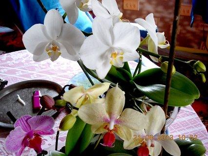FOTKA - 21.srpen - 9 - orchidejky