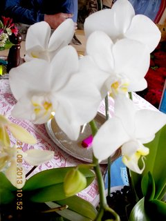 FOTKA - 21.srpen - 10 - orchidejky