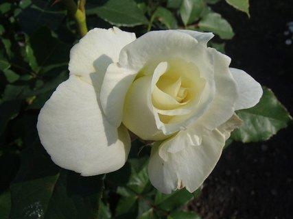 FOTKA - biela je pekná