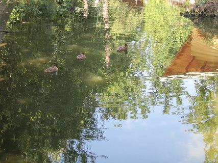 FOTKA - Kačky v Zoo