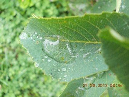 FOTKA - 27.8. - 3 - v dešti jsem si fotila přírodu