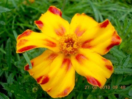 FOTKA - 27.8. - 13 - v dešti jsem si fotila přírodu