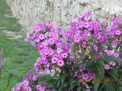 FOTKA - 27-30.8. - 26 - krásně kvetou