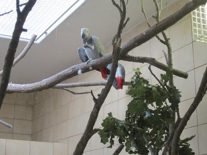 FOTKA - Papoušek Žako
