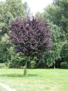 FOTKA - strom v parku*