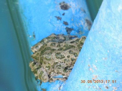 FOTKA - Žabičky obsadily bazén..