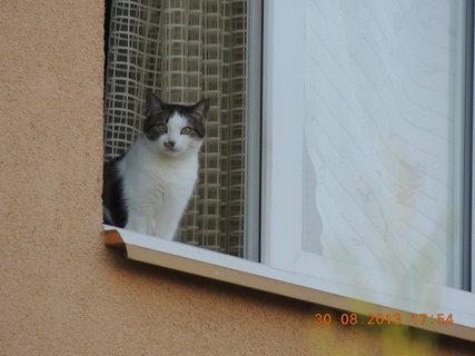 FOTKA - Sousedovic čičina na okně