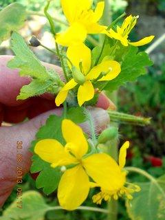 FOTKA - 30.8. - 4 - žluté kvítka