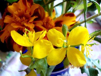 FOTKA - 30.8. - 6 - žluté kvítka doma ve vázičce