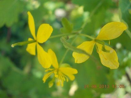 FOTKA - 30-31.8. - 15 - žluté kvítka