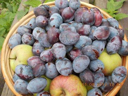 FOTKA - 31.8-2.9. - 13 - jablka a švestky ze zahrady
