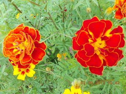 FOTKA - 2. - 3.9. - 10 - květy Afrikánů