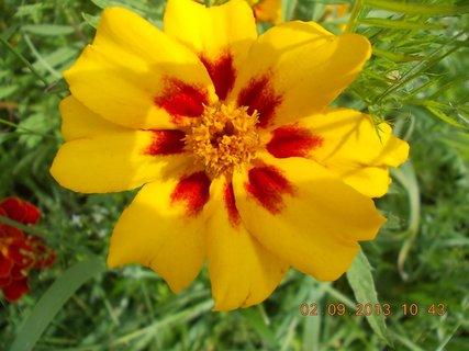FOTKA - 2. - 3.9. - 18 - květy Afrikánů