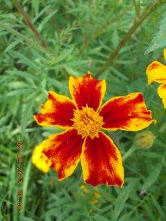 FOTKA - 2. - 3.9. - 19 - květy Afrikánů
