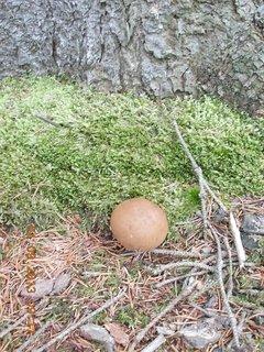 FOTKA - 4.9. - 1 - houby
