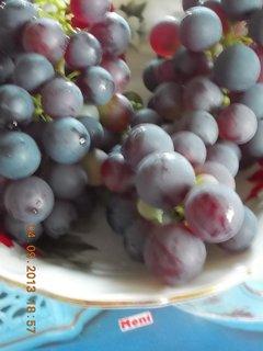 FOTKA - 4.9. - 23 - modré hrozno se už dá jíst