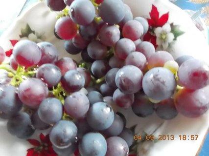 FOTKA - 4.9. - 24 - modré hrozno se už dá jíst