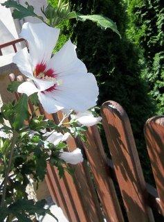 FOTKA - U dřevěného plotu