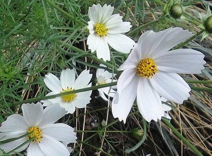 FOTKA - Bílá krása