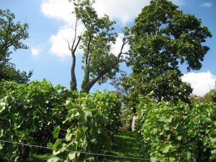 FOTKA - Svatováclavská vinice - Vyhlídková hřebenová  cesta 8