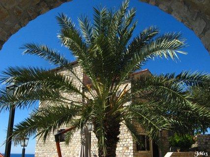 FOTKA - Palmy na jihu sv�ta