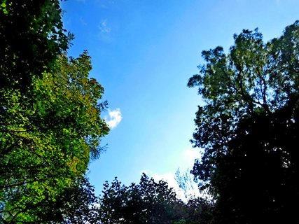 FOTKA - příroda112