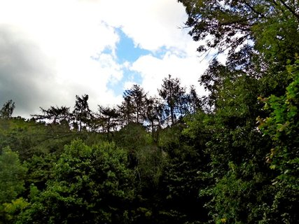 FOTKA - příroda147