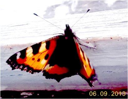 FOTKA - 7.9. + 5.9. - 5 - motýl