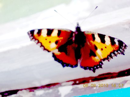 FOTKA - 7.9. + 5.9. - 6 - motýl