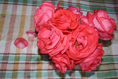 FOTKA - kytici růží..