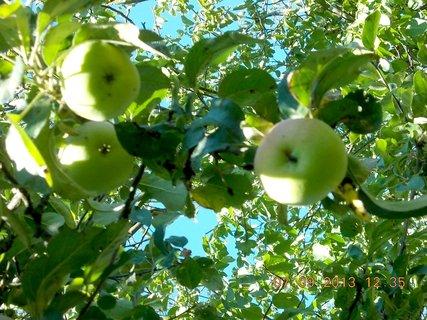 FOTKA - 8.9. + 7.9. - 9 - jablka