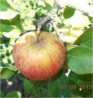FOTKA - 8.9. + 7.9. - 10 - jablko
