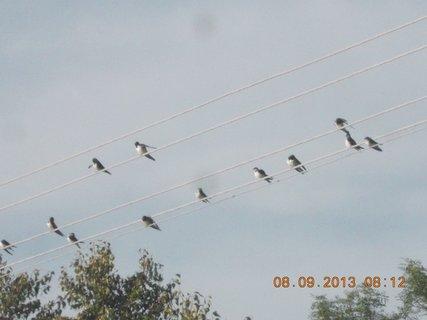 FOTKA - 8.9. + 7.9. - 20 - vlaštovky na drátech