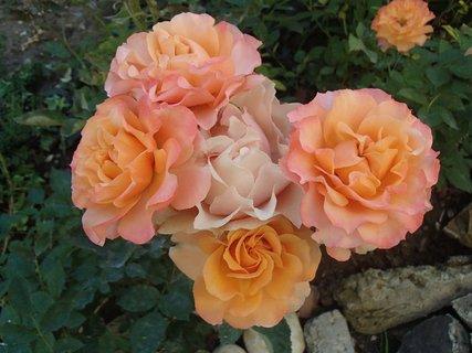 FOTKA - kopa ružičiek