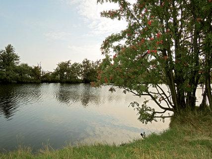 FOTKA - jeřabiny na břehu rybníka