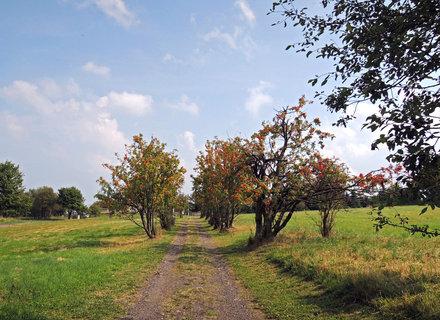 FOTKA - cesta jeřabinovou alejí