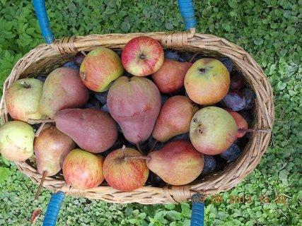 FOTKA - 9.9. + 8.9. - 20 - švestky a hrušky a jablka