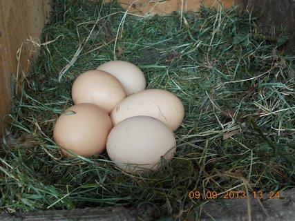 FOTKA - 9.9. + 8.9. - 21 - jedno vejce bylo ještě teplé
