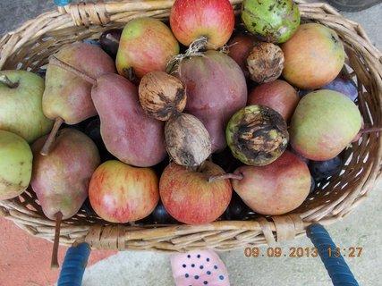 FOTKA - 9.9. + 8.9. - 20 - švestky a hrušky a jablka a ořechy