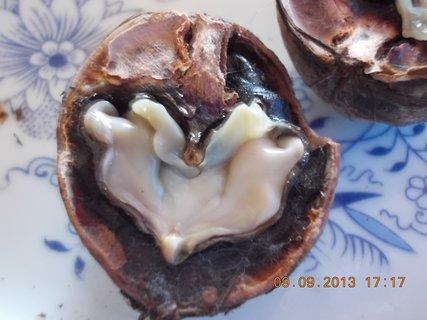 FOTKA - 9.9. + 8.9. - 25 - polovina ořechů je shnilých, proč?