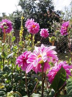 FOTKA - září na zahradě