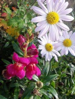 FOTKA - září na zahradě .