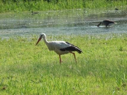 FOTKA - z cyklotoulek Lednicko-valtickým areálem, ptačí ráj NPR Lednické rybníky
