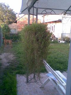 FOTKA - Bambus a Ben
