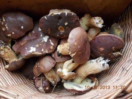 FOTKA - 10.9. - 9.9. - 23 - opět jsme byli na houbách