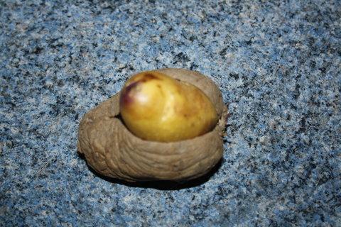 FOTKA - brambora v bramboře