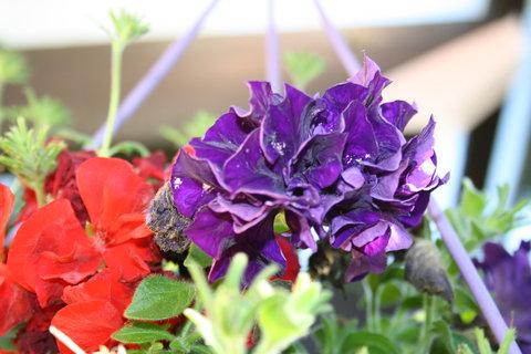FOTKA - barvy květů